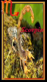 Scorpio Love Compatibility Horoscopes 2019 Findyourfate Com